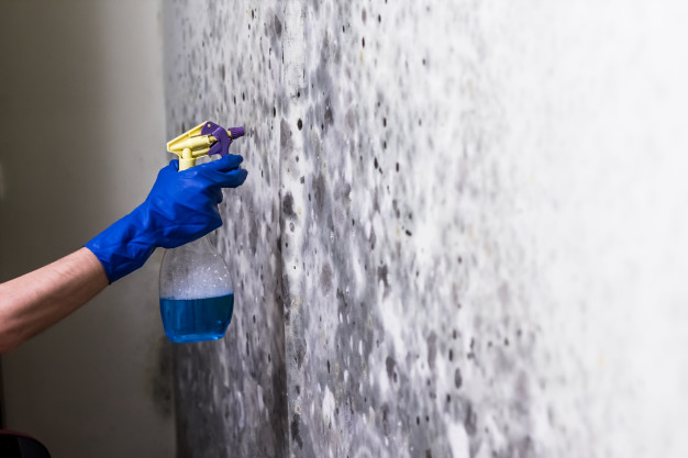 Mold Clean-Up and Mold Remediation Services
